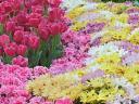 flowers_446.jpg